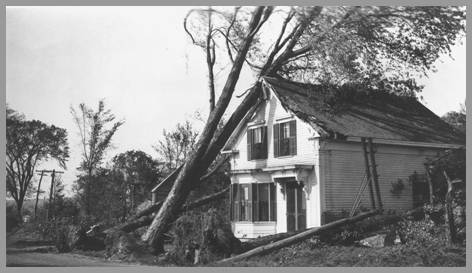 Photo of Ida Fletcher's home with fallen tree on it.